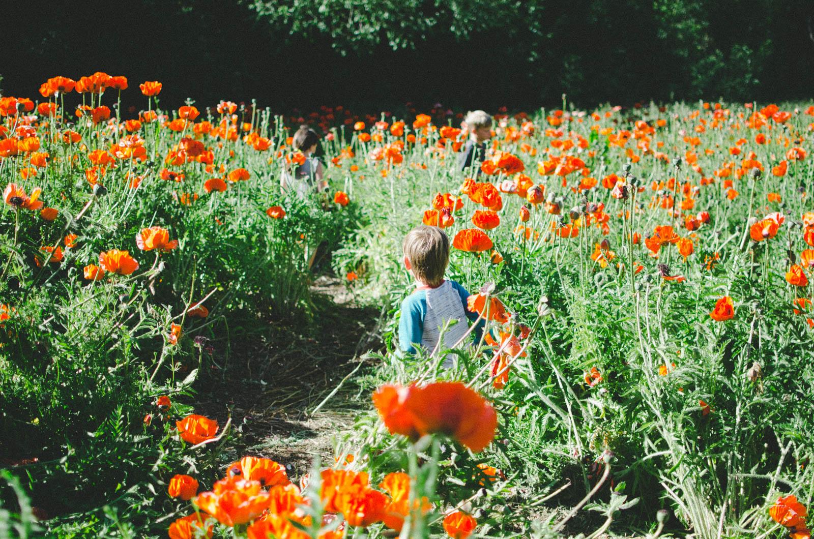 poppy fields Alpine Utah